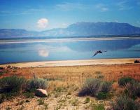 拉斯维加斯出发黄石公园7日游:LV7-189
