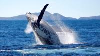 茂宜岛出发游船观光1日游:HO-T-10908
