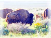 拉斯维加斯出发黄石公园、羚羊谷、特色西峡小木屋5日游:LV5-198